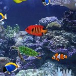 Aquarium Live Wallpaper - Bilde 06